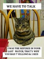 Wtf-referee-cat.jpg