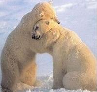 WHY God damn it?!!! WHY?!!-hug-bear-2.jpg